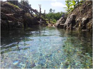 Dalla Terra dei Fuochi: sgorga una sorgente pura e benefica