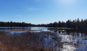 Le meraviglie della Lapponia Finlandese, nell'area naturalistica