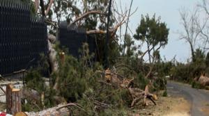 """""""Rivogliamo gli alberi"""", oggi raccolta di firme a Posillipo"""