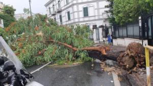 Napoli, bomba d'acqua sulla città: si contano i danni ,strade allagate e alberi divelti