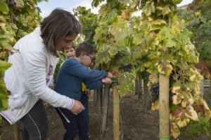 Resilience: la Vigna didattica apre ai bambini il 23 settembre